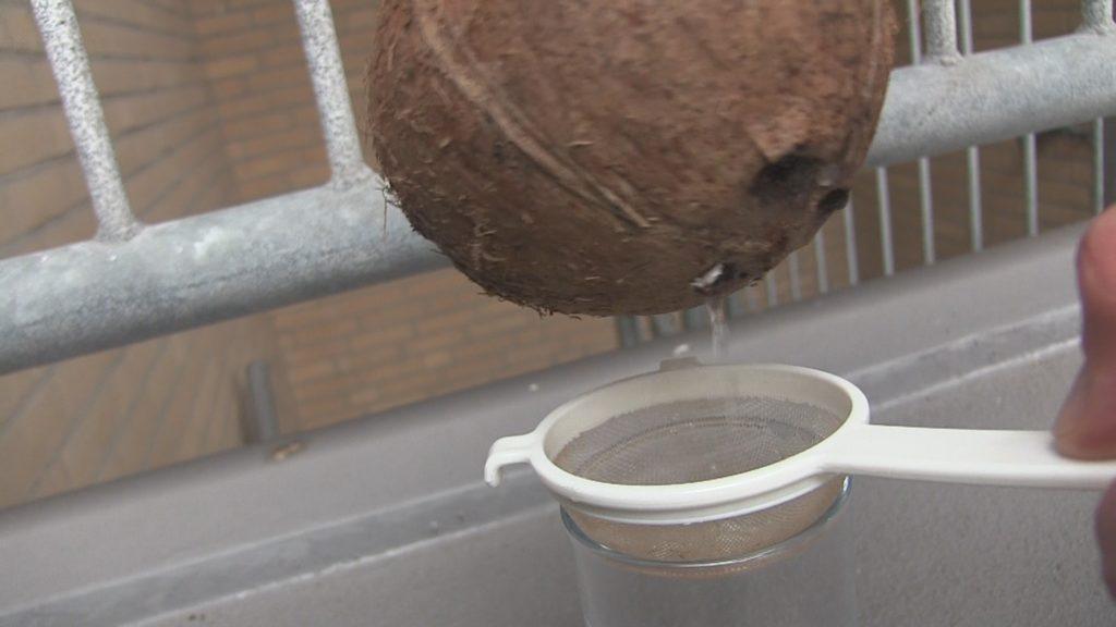 kokoswater kokosnoot
